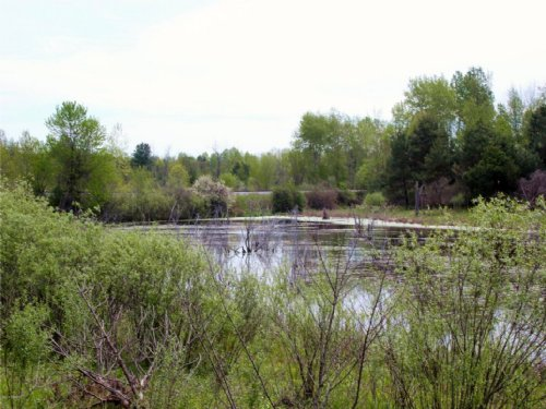 Private 80 Acre Parcel : Fountain : Mason County : Michigan