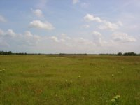 101 Acre Ranch / Investment Land