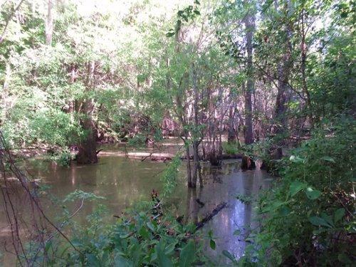 Walden Ridge : Kite : Johnson County : Georgia