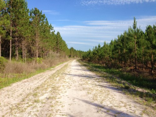 710 Ac Huckleberry Island : Waycross : Ware County : Georgia