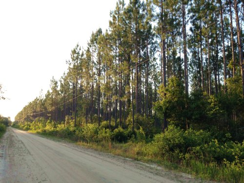 295 Acres On Camp Branch Cross Rd : Waycross : Ware County : Georgia