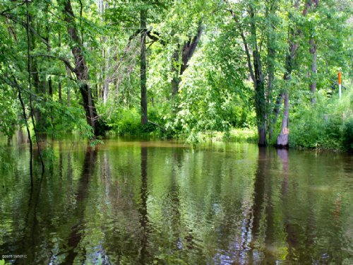 Wooded Parcel On The Paw Paw River : Paw Paw : Van Buren County : Michigan
