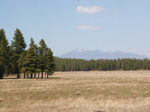 37 Acres In Coconino Natl Forest : Munds Park : Coconino County : Arizona
