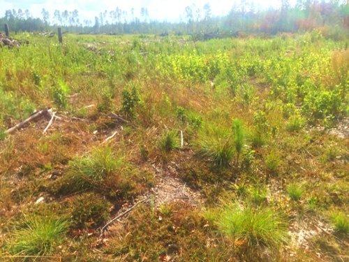 Jones Swamp Road Tract : Walterboro : Colleton County : South Carolina