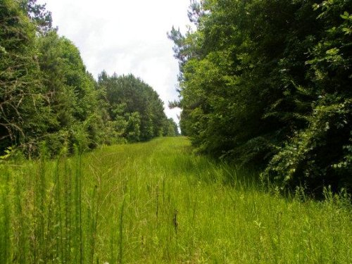 13.92 Acres In Pike County, Mississ : McComb : Pike County : Mississippi