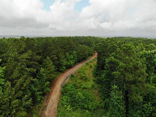 58-004 Pea Ridge 60 Hunting Timber : Montevallo : Shelby County : Alabama