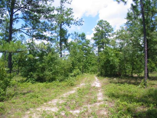 Reduced 105.75 Acres Wooded : Augusta : Richmond County : Georgia