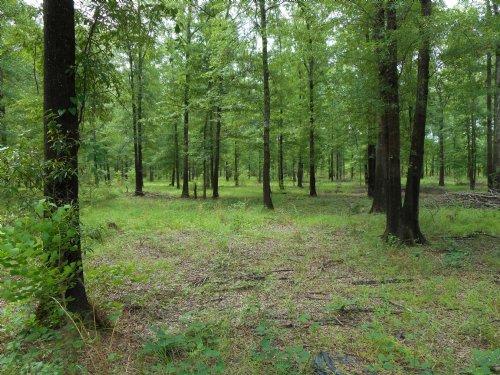 West Monroe Honey Hole : West Monroe : Ouachita Parish : Louisiana