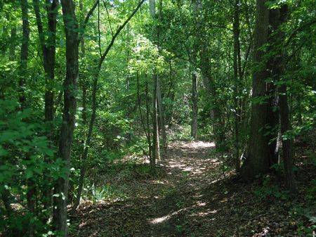 Recreational Timber Tract : Chesnee : Spartanburg County : South Carolina