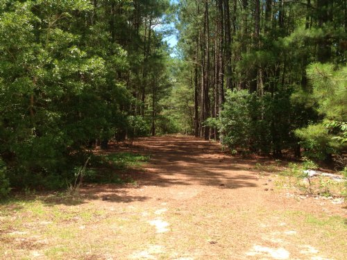 22 Acres In Camden : Camden : Kershaw County : South Carolina