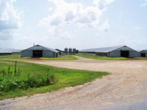 8 House Broiler And Cattle Farm : Grove Oak : DeKalb County : Alabama