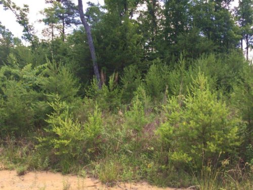 25+/- Acres Highland Bluffs : Tracy City : Grundy County : Tennessee