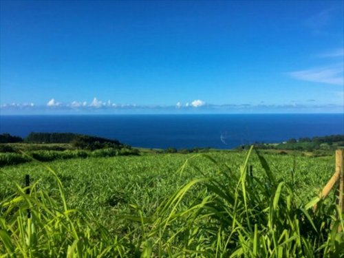 24 Ac Hamakua 395K : Papaloa : Hawaii County : Hawaii