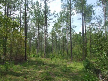 217 Acres Joining National Forest : Brent : Perry County : Alabama