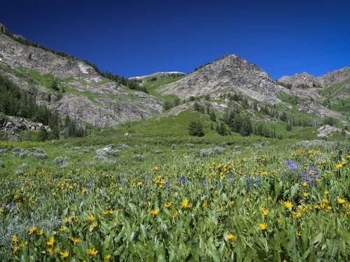 Wasatch Peaks Ranch : Peterson : Morgan County : Utah