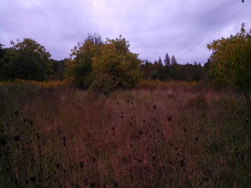 Field Of Dreams : Prospect : Prince Edward County : Virginia