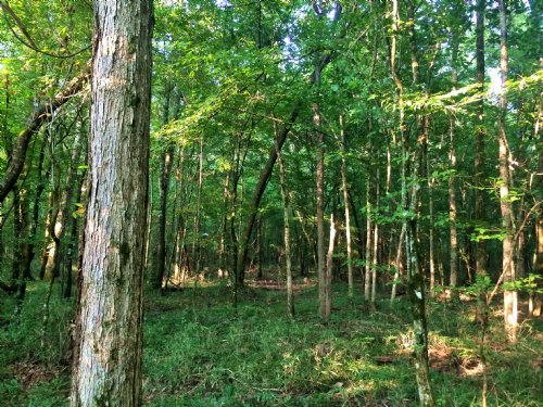 Elmore 64.6 Ac Hunting And Homesite : Wetumpka : Elmore County : Alabama
