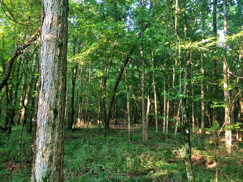 Elmore 64.6 Ac Hunting And Homesite : Wetumpka : Elmore County : Alabama