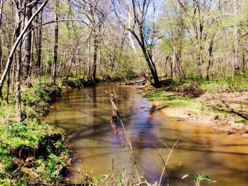 Coosa 202 Timber Investment : Stewartville : Coosa County : Alabama