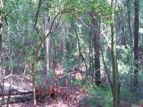 Ohoopee River Tract : Swainsboro : Emanuel County : Georgia