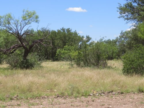Recreational, Hunting Property : Eden : Concho County : Texas
