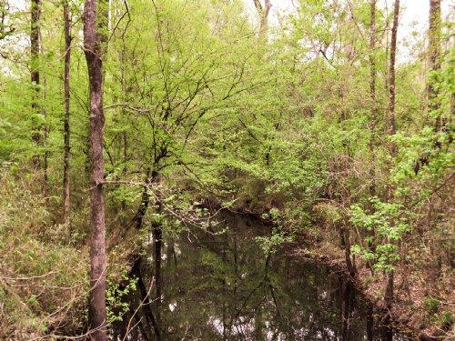 651 Acres Rock Island : Corrigan : Polk County : Texas