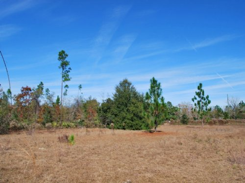 20 Acres In Quiet Country Setting : Screven : Wayne County : Georgia