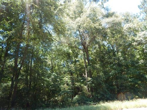 Mature Hardwoods- 97.99 Acres : Tylertown : Walthall County : Mississippi