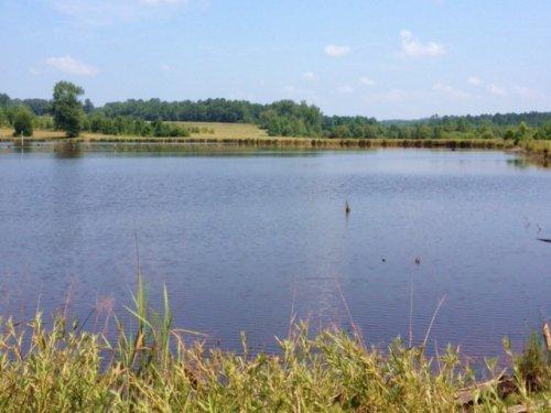 615 Ac With 26 Ac Lake : Banks : Pike County : Alabama