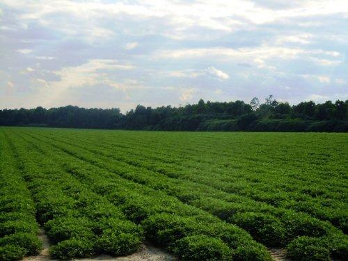 Clito Farm : Statesboro : Bulloch County : Georgia