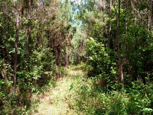 104 Acres Of Recreational Land : Maben : Oktibbeha County : Mississippi