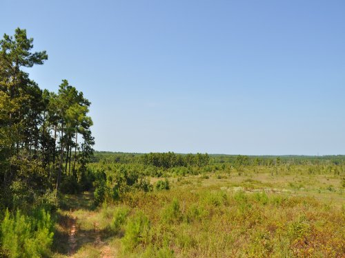 425 Acres Ryan's Ferry Road : Pointblank : San Jacinto County : Texas