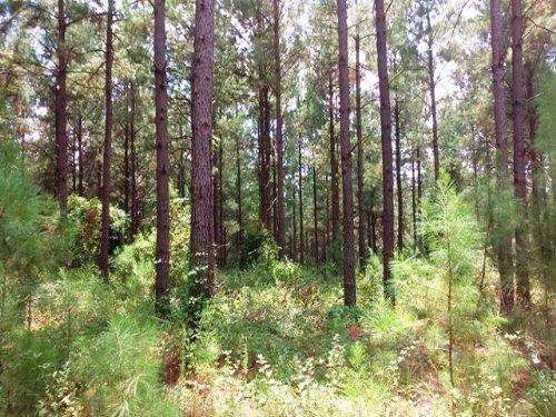 Longbeard Plantation : Butler : Taylor County : Georgia