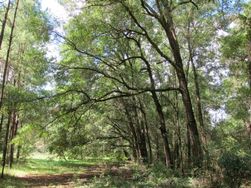 20.97 Acres On Paved Road : Williston : Levy County : Florida