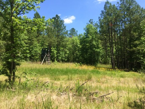 31.06 Acres : Ridgeway : Kershaw County : South Carolina