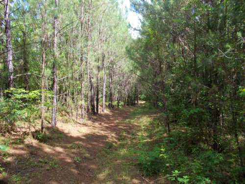 72 Acre Hunting Club : Verbena : Chilton County : Alabama