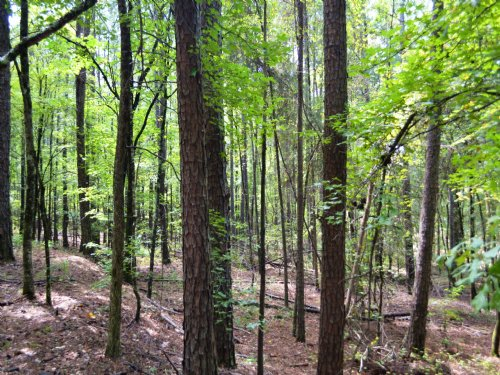 80 +/- Acres : Lafayette : Chambers County : Alabama
