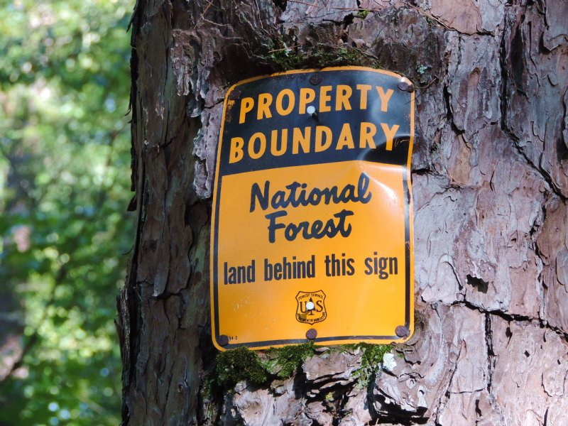 National Forest Tract : Greensboro : Greene County : Georgia