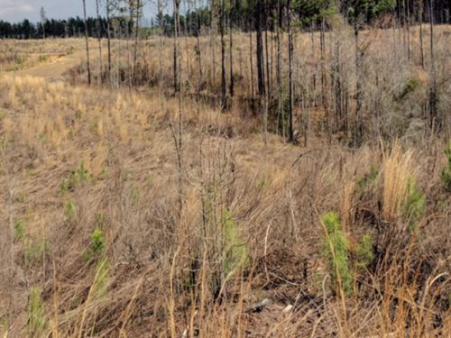 38.1 Acres In Attala County In Sall : Sallis : Attala County : Mississippi