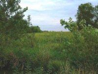 Goose Lake Farm : Quincy : Adams County : Illinois