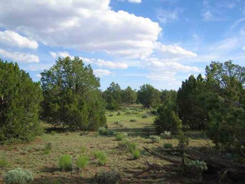 36 Acre Wilderness Freedom Ranch : Saint Johns : Apache County : Arizona