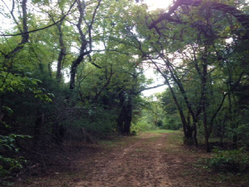 241 Acres / 29459 : Arthur City : Lamar County : Texas