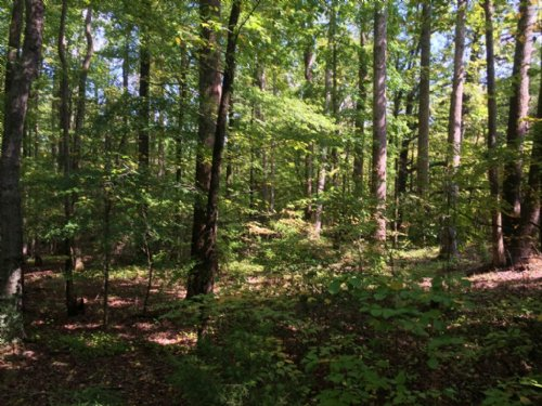 Richmond Heirs Tract : Efland : Orange County : North Carolina