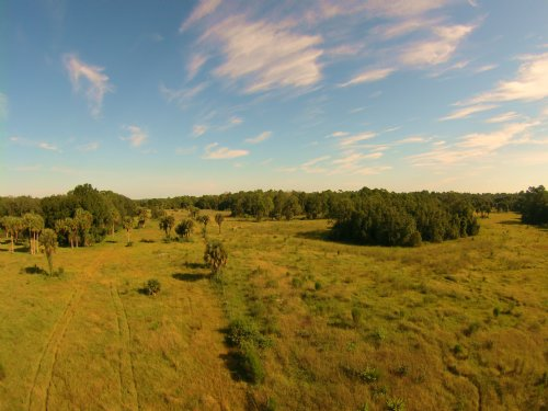 Sand Hill 40 Acres : Okeechobee : Florida