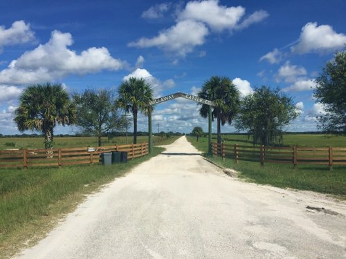 Willaway Cattle Ranch : Okeechobee County : Florida
