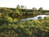 Medicine Creek Land Auction
