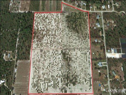 21.± Ac Grove With Development Opp. : Sebring : Highlands County : Florida