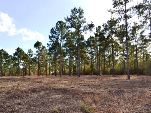 Slapout Lot E 16 +/- Acres : Holtville : Elmore County : Alabama