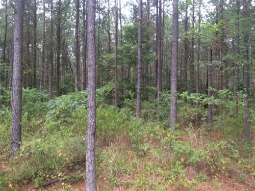 Hunting Land, Timberland, For Sale : Canton : Madison County : Mississippi