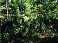 10.5 Acres For Sale : Brooksville : Hernando County : Florida